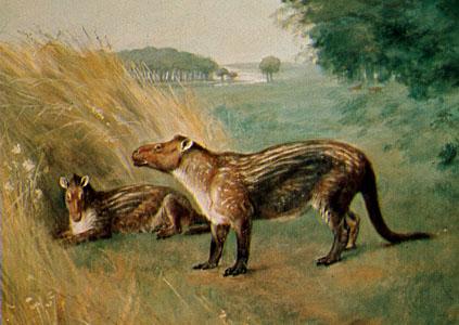 El género Fenacodóntido pertenece a los Condilartros