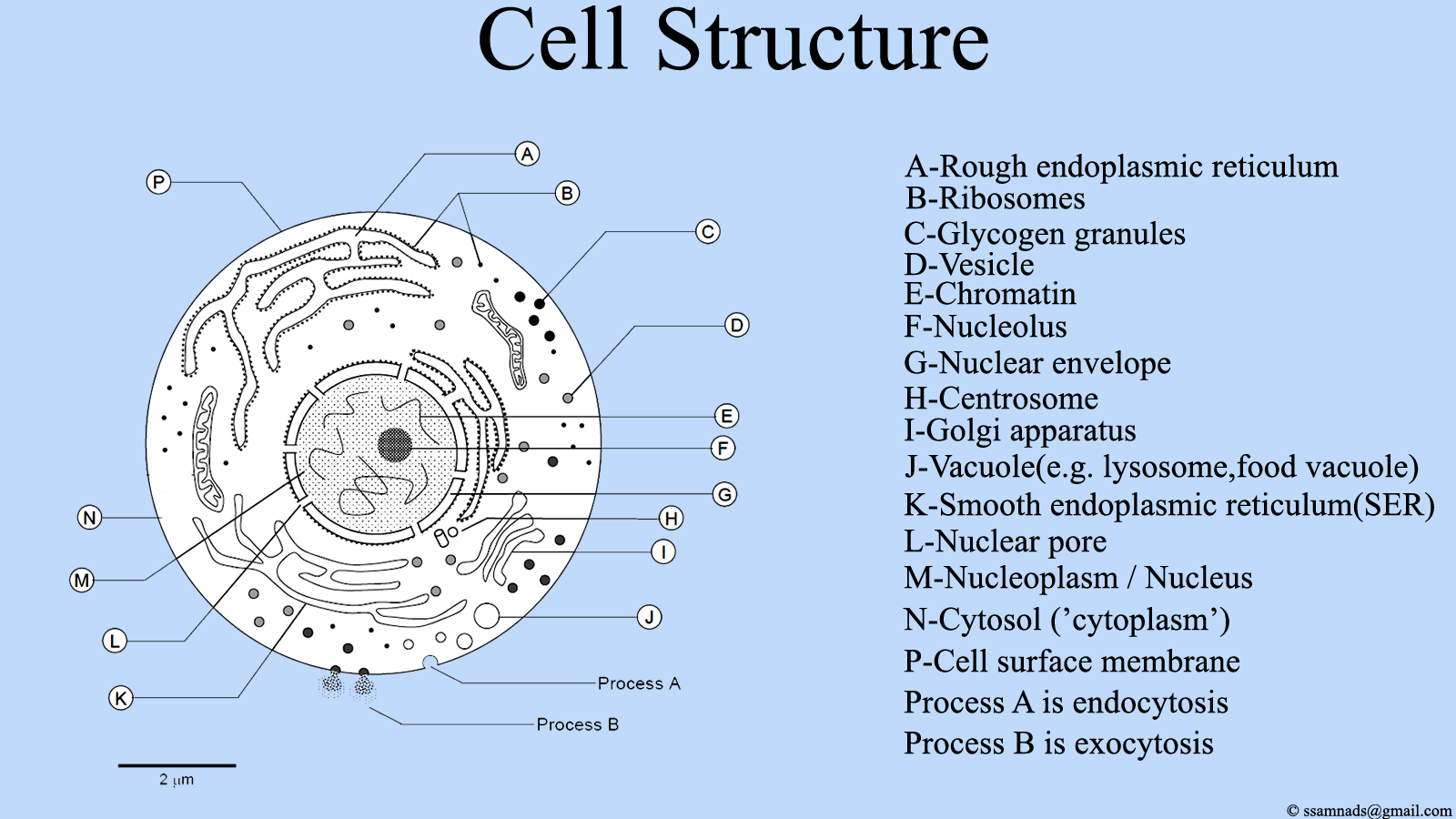 File Cell Structure Cell Diagram