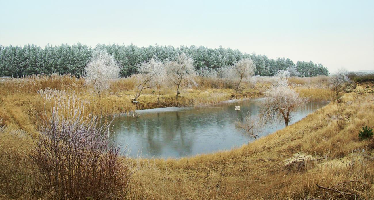 Backyard Pond Management