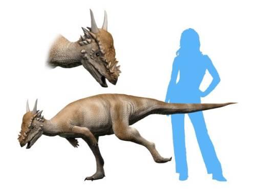 https://i2.wp.com/upload.wikimedia.org/wikipedia/commons/b/b0/Stygimoloch_NT_small.jpg?resize=500%2C375&ssl=1