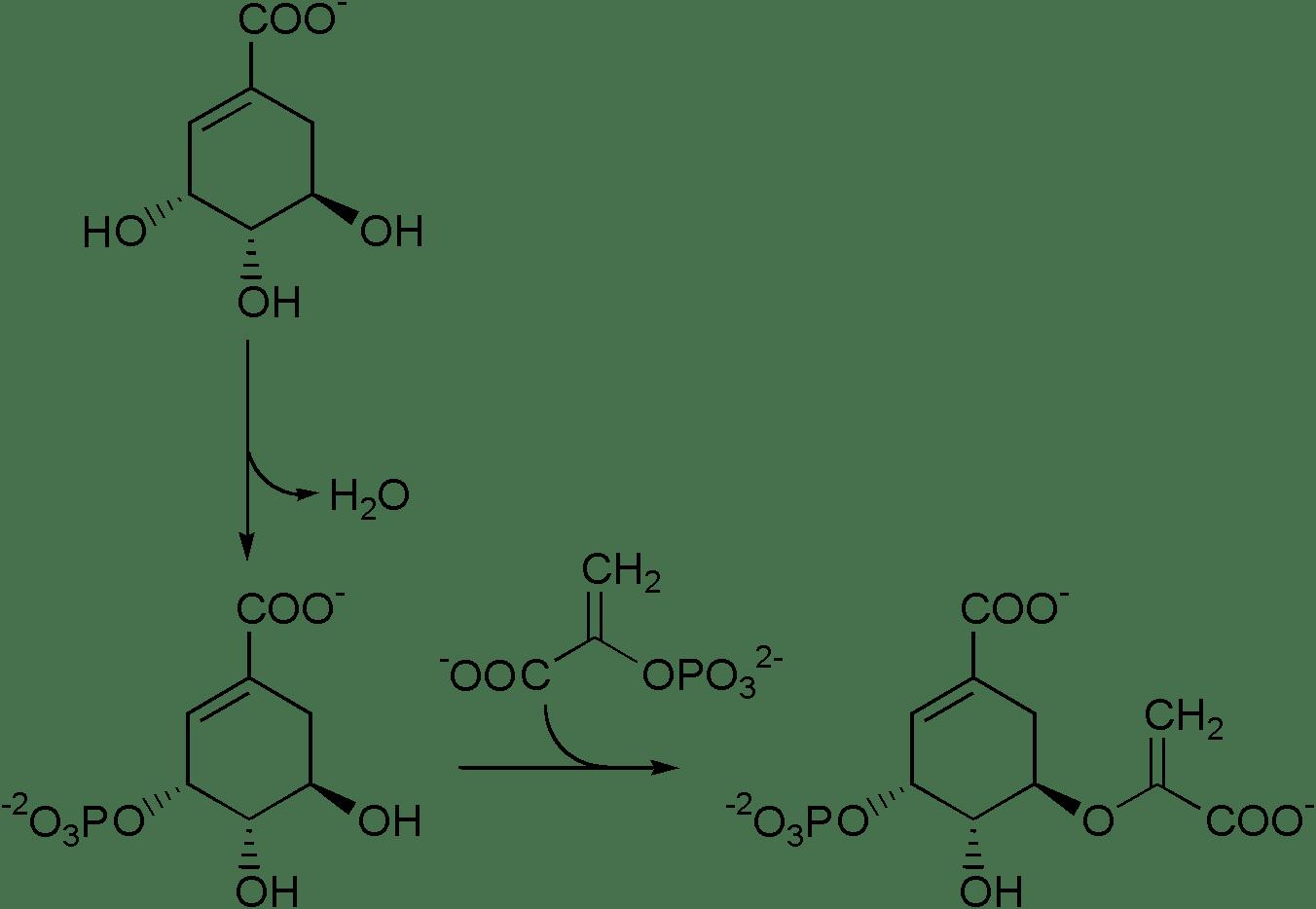 Shikimic Acid