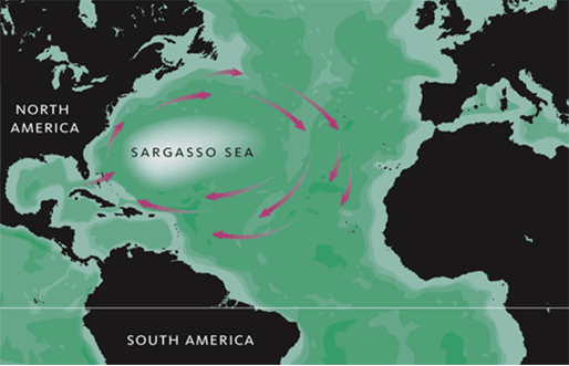 The Sargasso Sea