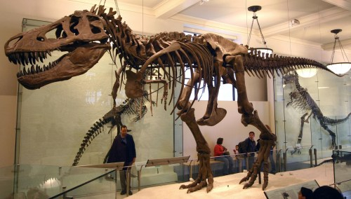 https://i2.wp.com/upload.wikimedia.org/wikipedia/commons/b/b4/T-Rex.jpg?resize=500%2C284&ssl=1