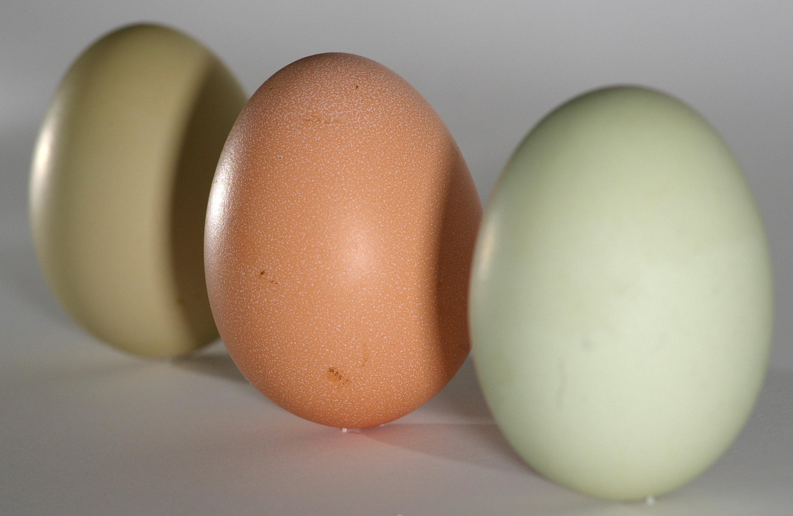100 nutrition of egg shells the chicken chicken