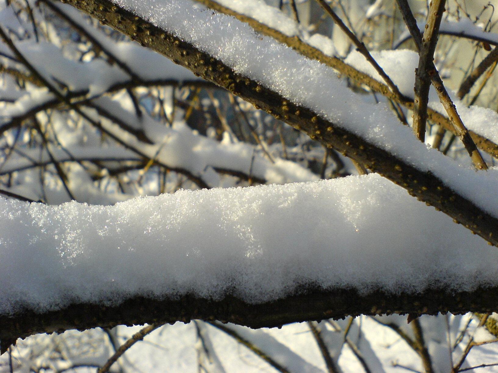 Fresh snow on a thin twig