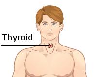 Thyroid dummy.jpg