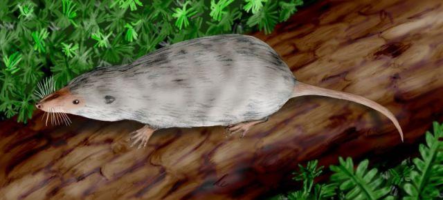 Ancestros de los mamíferos: Adelobasileus