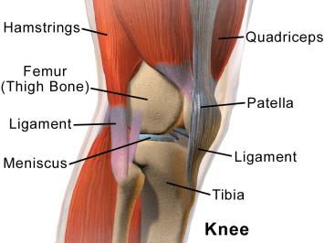 Afbeeldingsresultaat voor knee joint