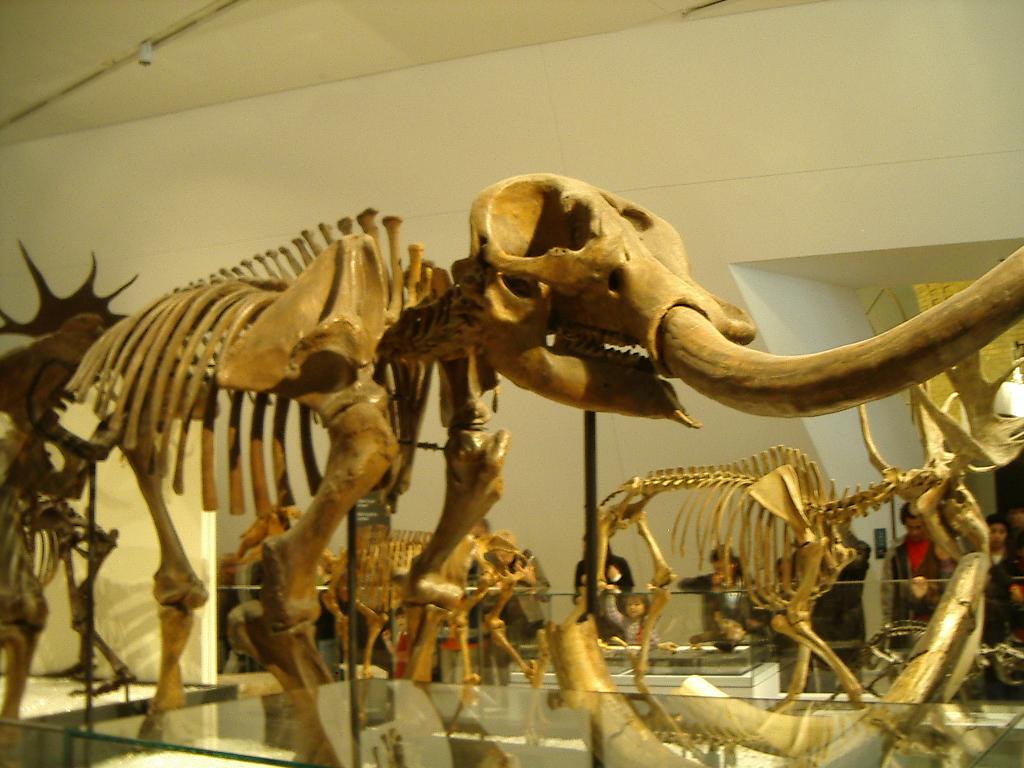 A different sort of mastodon