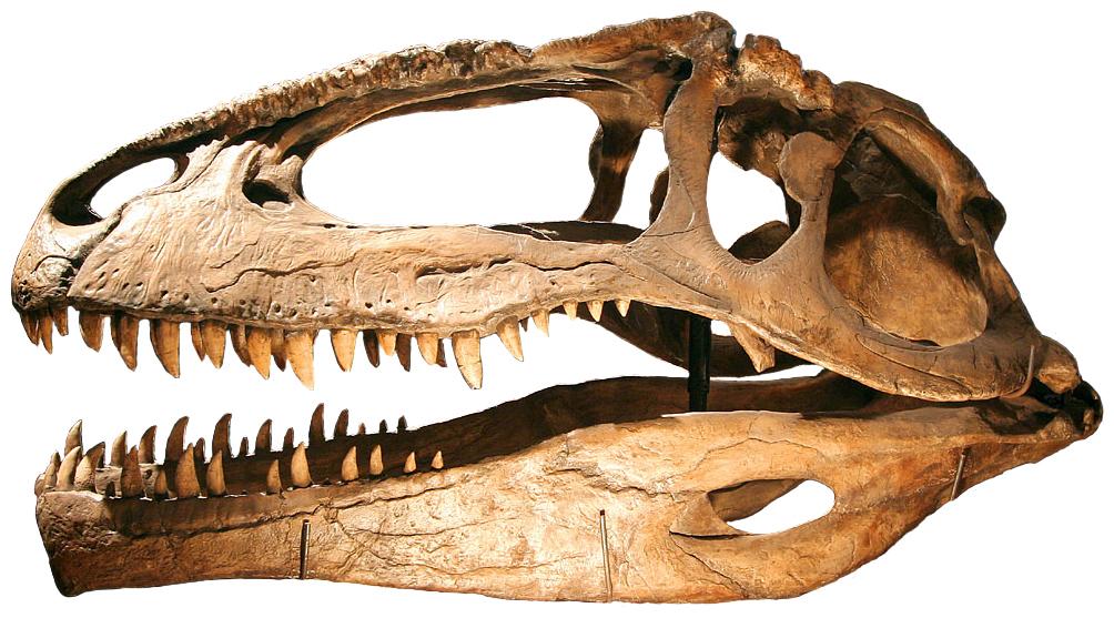 https://i2.wp.com/upload.wikimedia.org/wikipedia/commons/b/bd/Giganotosaurus.jpg