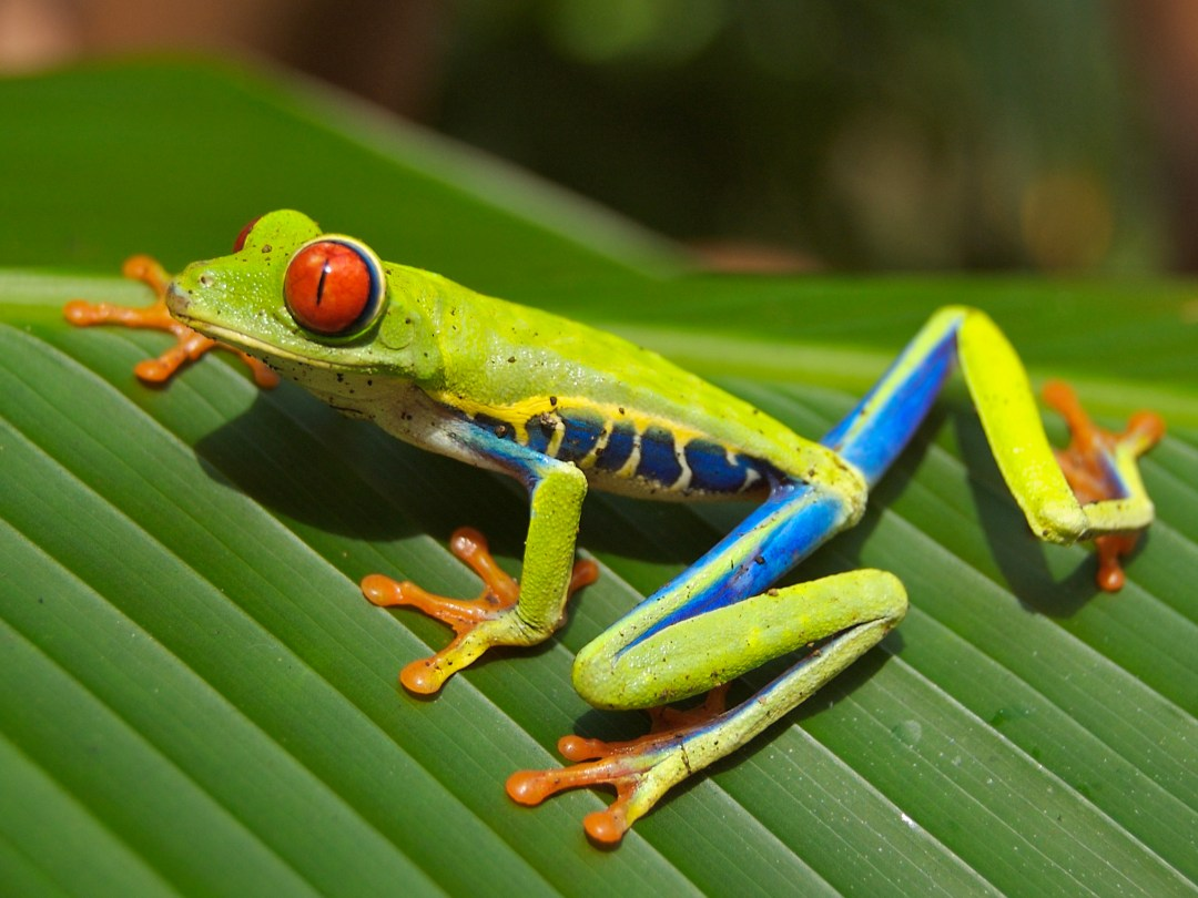 Image result for costa rica biodiversity