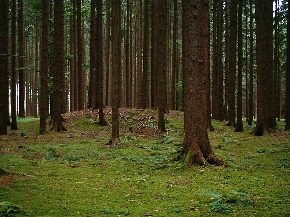 Skog Wiktionary