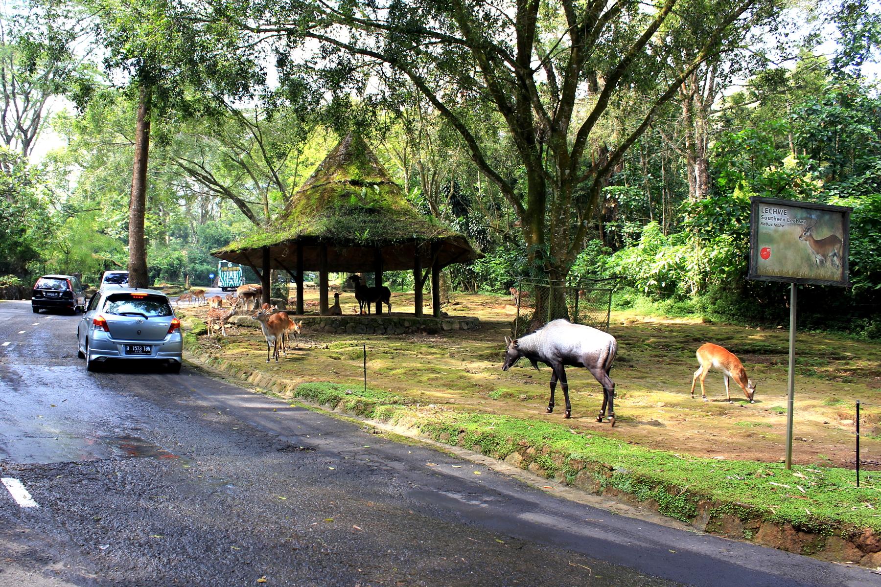 file taman safari indonesia jpg