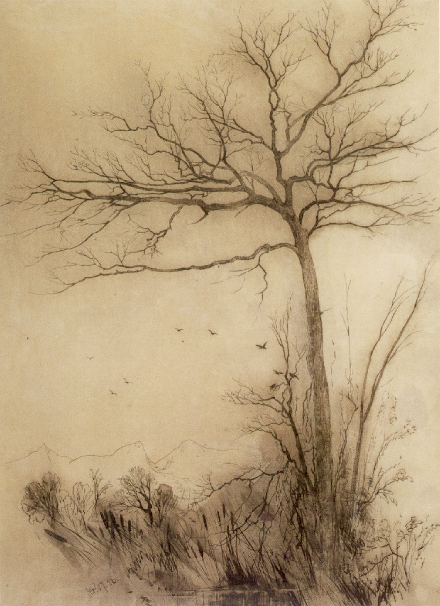 Ink Artist And Pen Tree