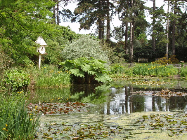 Water Lily Pond Water Irises
