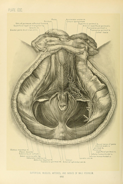 Heart Anatomy Quiz Medical Students