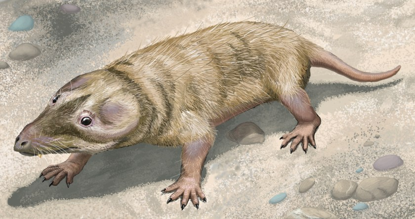 Image result for early mammal cynodont