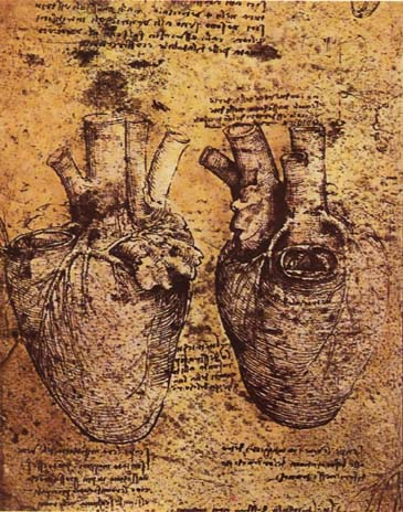 https://i2.wp.com/upload.wikimedia.org/wikipedia/commons/c/c8/Leonardo_da_vinci%2C_Heart_and_its_Blood_Vessels.jpg
