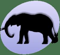P Elephant