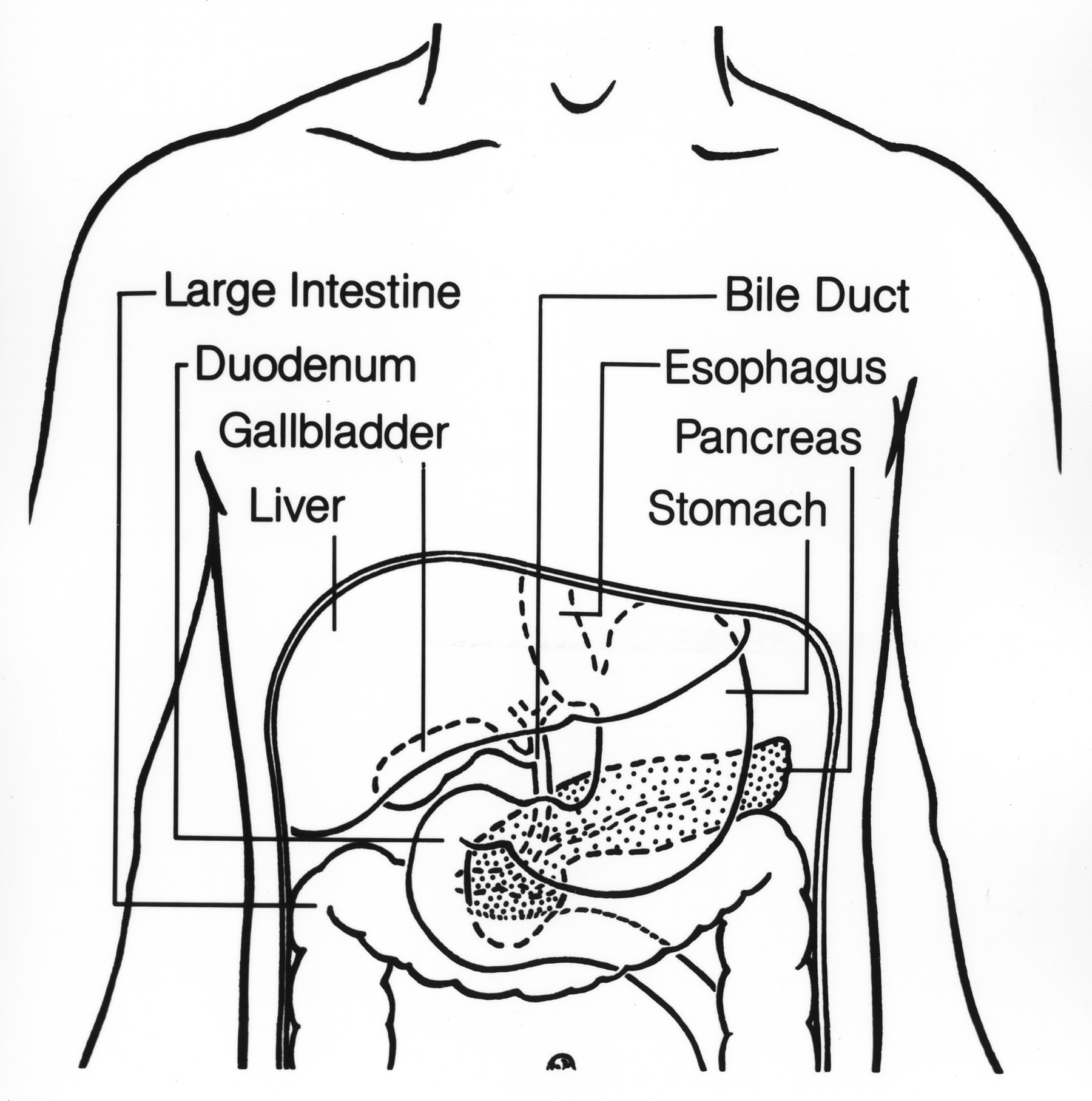 File Digestive Tract Upper