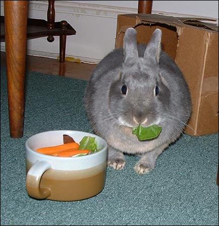 Rabbit eating greens. Image via Wikipedia.