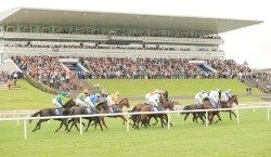 English: Horse racing action at Limerick races...