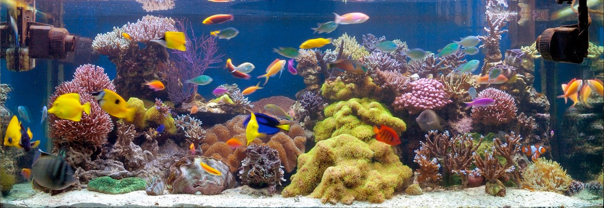 Large saltwater aquarium with colorful fishes of various shapes and sizes swimming around soft and hard corals