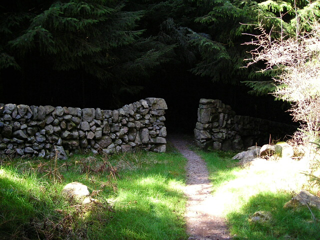 English: Entrance to Spooky Woods in Dalbeatti...