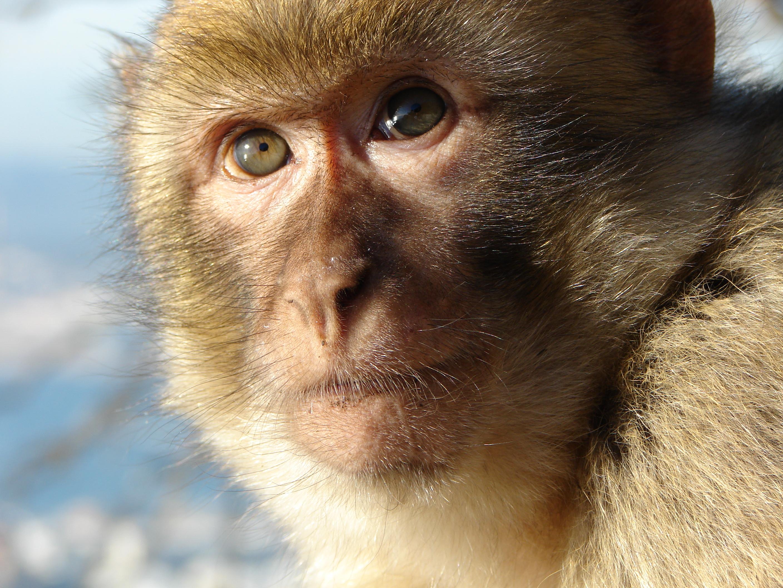 Omsorg om djur som denna berberapa är den yttersta bevekelsegrunden för detta projekt.