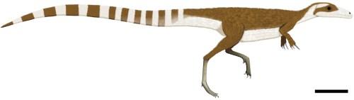 https://i2.wp.com/upload.wikimedia.org/wikipedia/commons/c/ce/Sinosauropteryx_color.jpg?resize=500%2C141&ssl=1