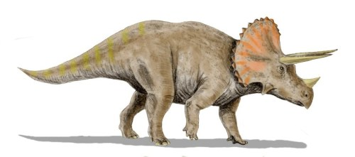https://i2.wp.com/upload.wikimedia.org/wikipedia/commons/c/ce/Triceratops_BWMK.jpg?resize=500%2C221&ssl=1