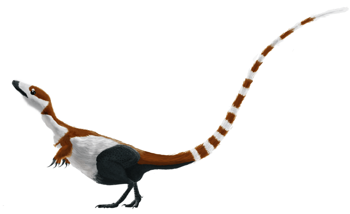 File:Sinosauropteryx mmartyniuk solosml.png