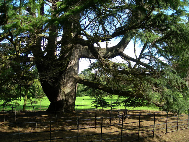 A giant tree surrounded by fences.