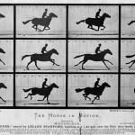Horse Gait Wikipedia