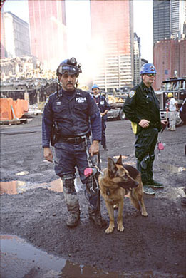 A search and rescue dog at the World Trade Cen...