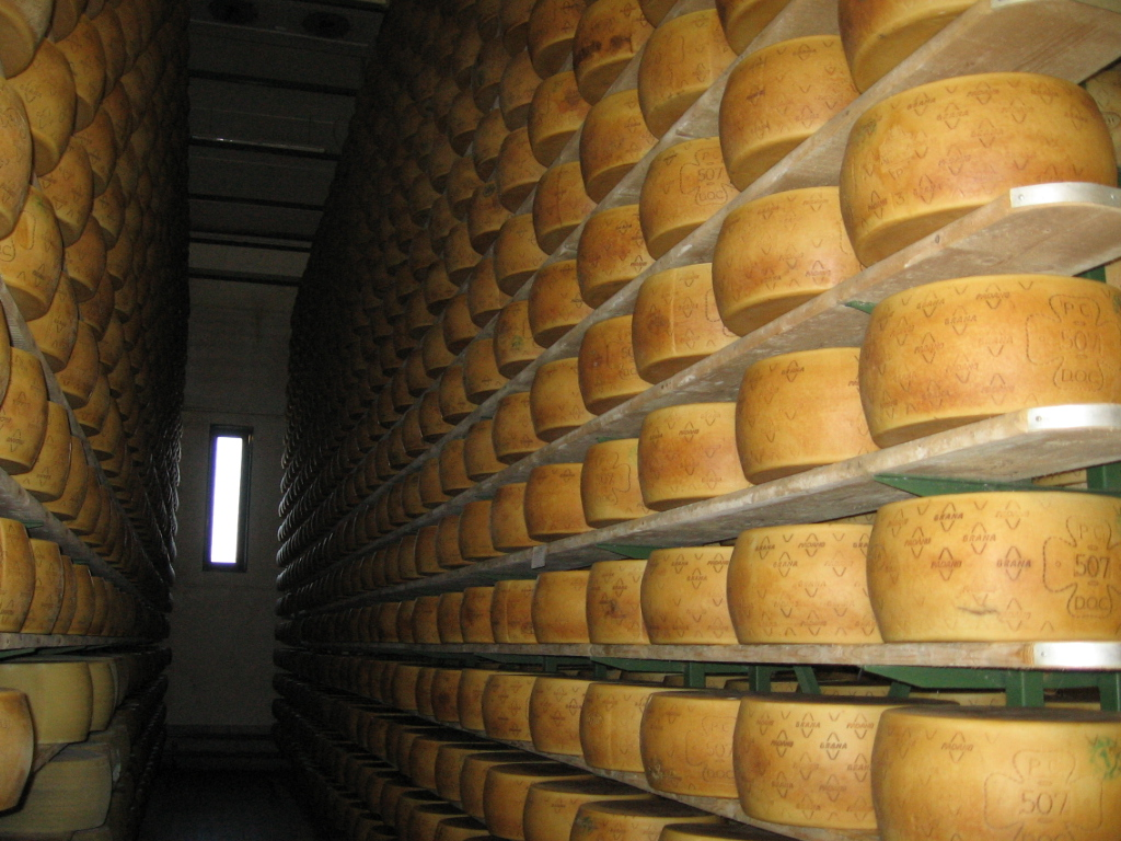 food tour in Parma Piacenza, King cheese tour Grana Padano
