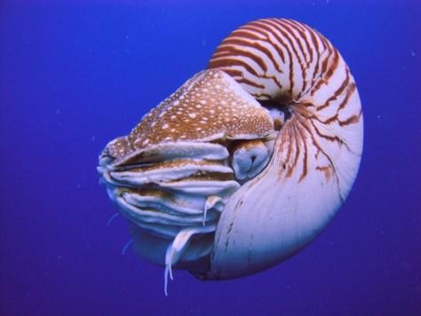 หอยงวงช้างหรือ Nautilus ครับ ตามันอยู่ตรงกลางภาพ เป็นรูให้แสงเข้าไปได้