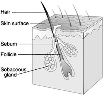 HairFollicle
