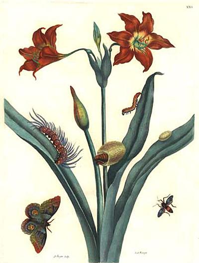 De Europische Insecten Merian Bernard.jpg