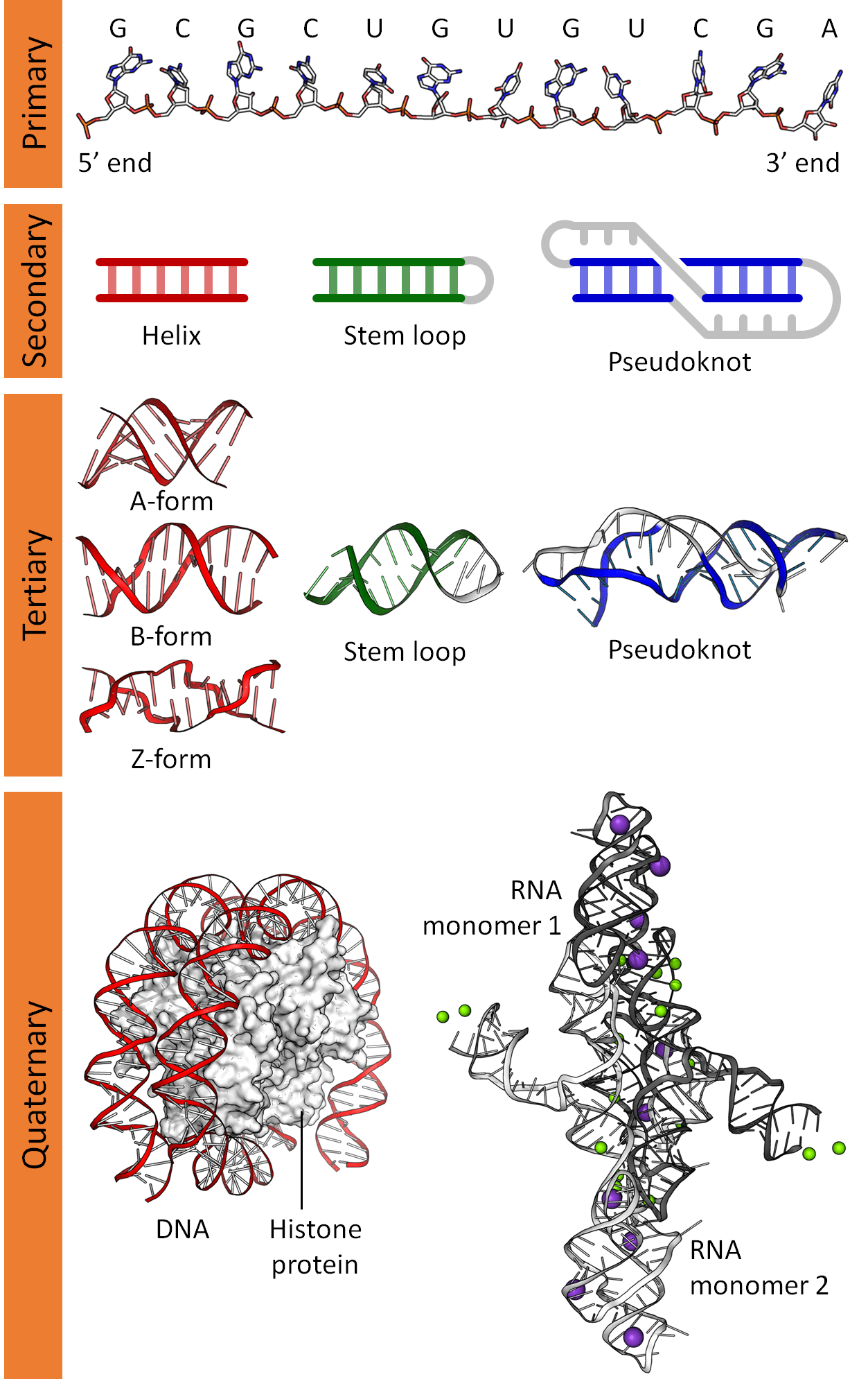 File Dna Rna Structure Full
