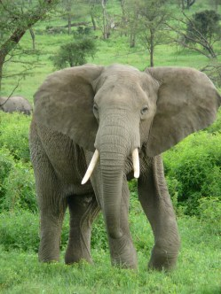Financial Elephant