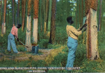 American Turpentine workers circa 1912