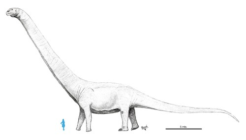 https://i2.wp.com/upload.wikimedia.org/wikipedia/commons/e/e2/Patagotitan_mayorum.jpg?resize=500%2C284&ssl=1