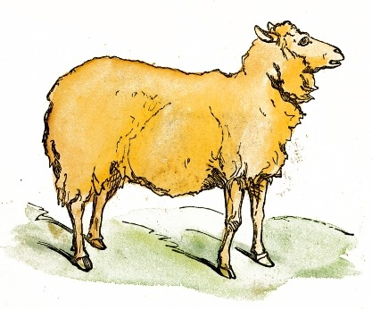 File:Watercolor Sheep Drawing.jpg