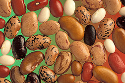 Diversity in dry common beans