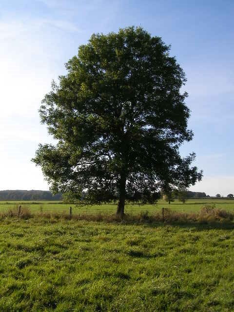 """""""Ağaç"""""""