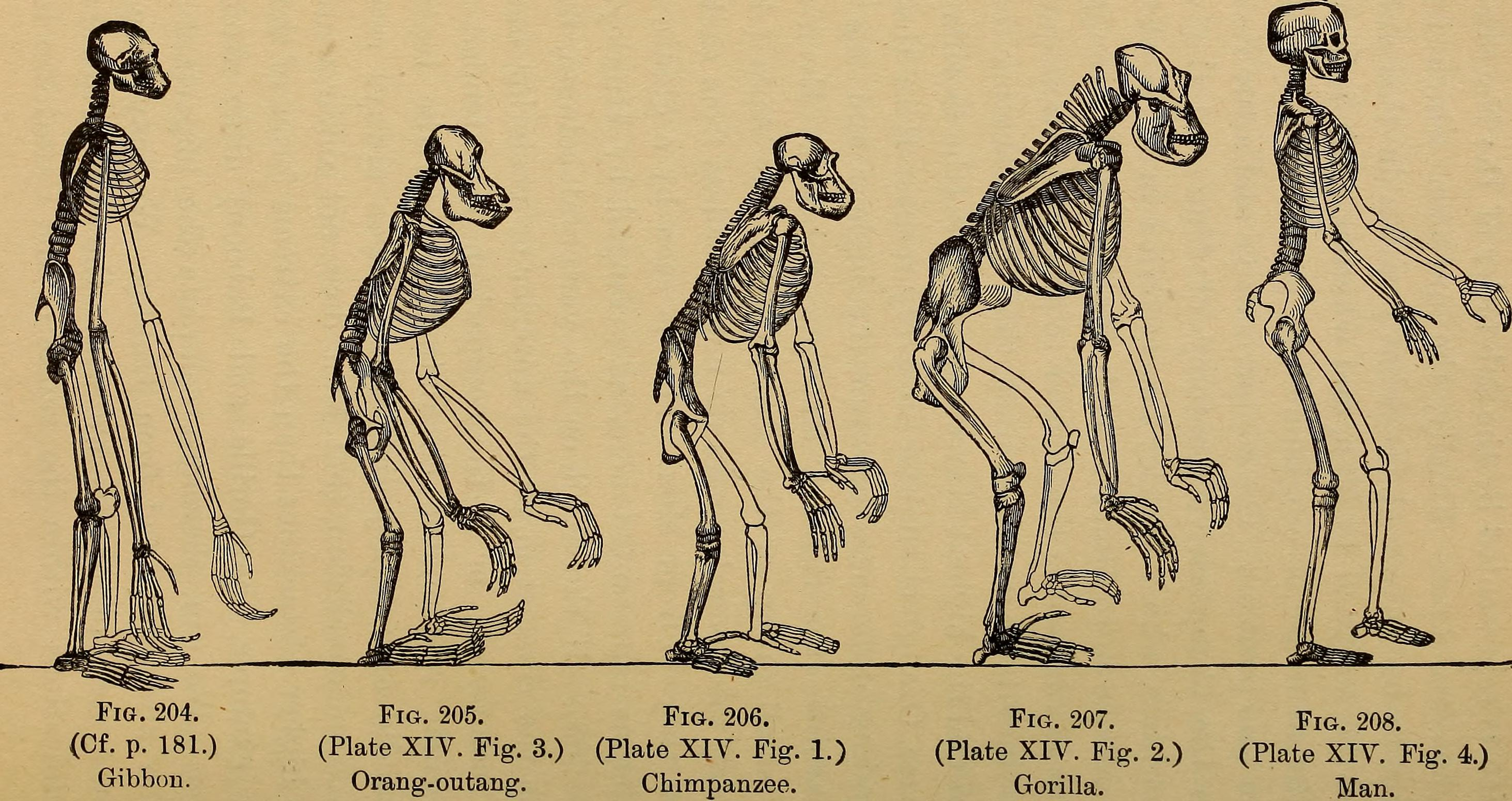 File The Evolution Of Man A Popular Exposition Of The
