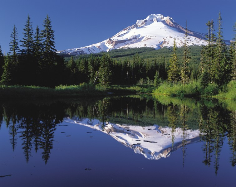 Cascade Range   Wikipedia Mount Hood is the tallest point in the U S  state of Oregon