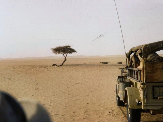 Världens mest isolerade träd