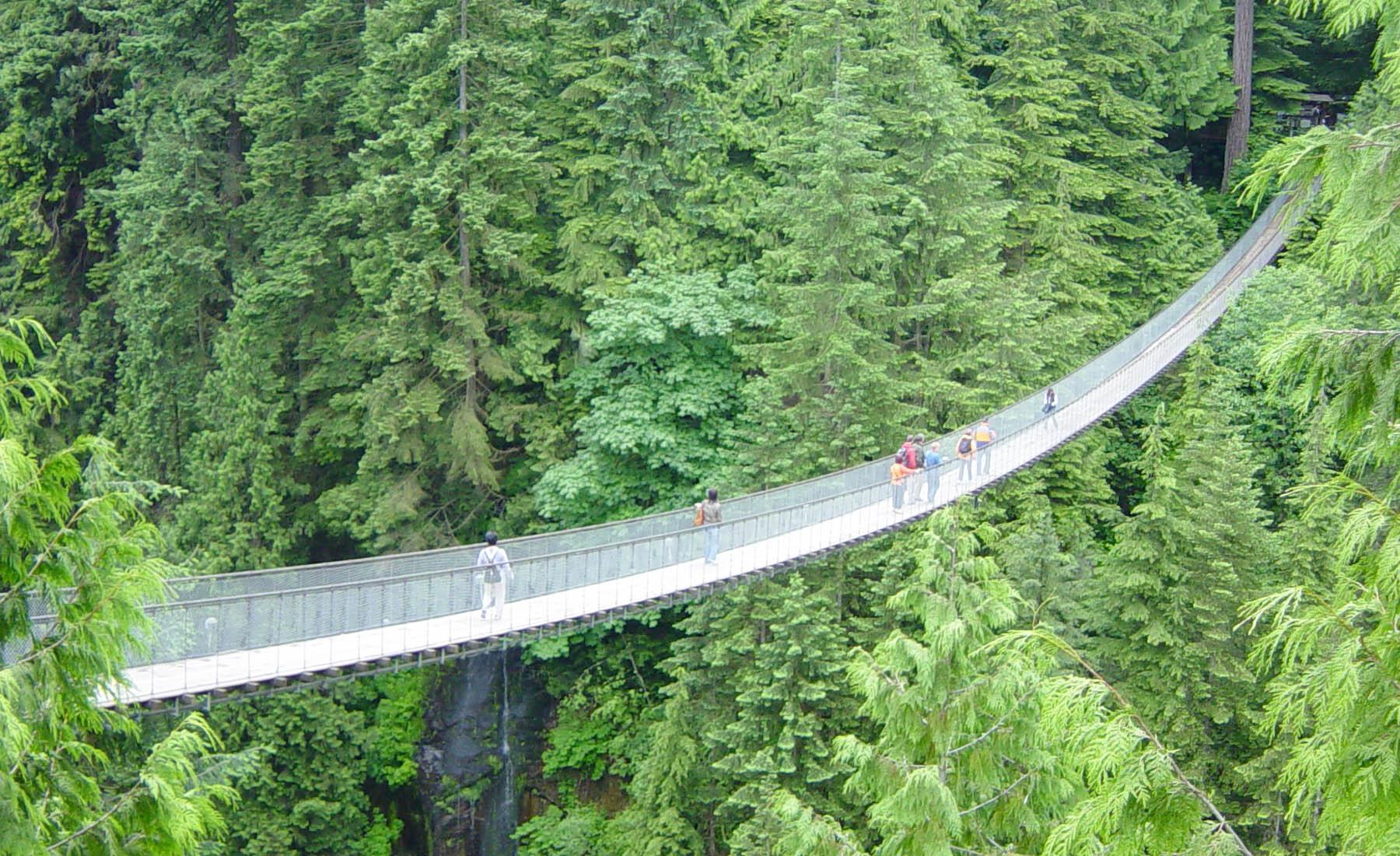 Big trees provide stunning background for Capilano Bridge in British Columbia
